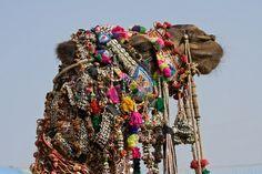 (CAMELLOS ADORNADOS) - Camel at the Pushkar Fair ( Pushkar Camel Mela ) Rajasthan, India Stock Photo - 16741712