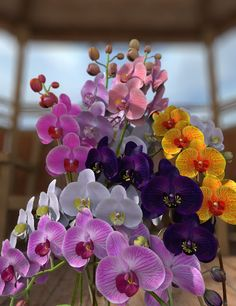 Beautiful phalienopsis orchids.