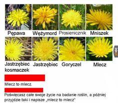 Kampania niskich lotów - Jeja.pl True Memes, Funny Memes, Funny Lyrics, Polish Memes, Weekend Humor, Quality Memes, Haha, I Am Awesome, Funny Pictures