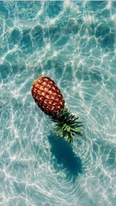 Who lives in a pineapple. comment