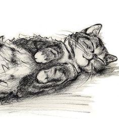 Alisa Wilcher ~ Funny Cat