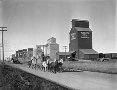 ***Hauling grain to the elevators in Vulcan, Alberta, O Canada, Alberta Canada, Canadian History, Vintage Farm, Old Farm, Historical Pictures, Sculpture, Abandoned Places, Old Photos