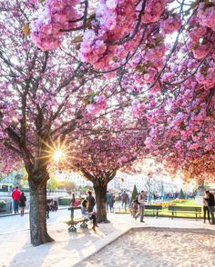 """4,160 Likes, 68 Comments - Saúl Aguilar® (@saaggo) on Instagram: """"The #magic of the #spring in #paris. Follow my good friend David @david_fossa He loves to take…"""""""