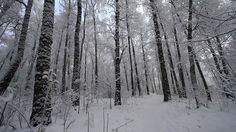 DOWNLOAD http: https://vectors.work/article-itmid-1006832046i.html ... Winter  Forest 23 ...  frost, frosty, ice, icy, nature, plant, sky, snow, sun, temperature, tree, weather, white, winter  ... Templates, Textures, Stock Photography, Creative Design, Infographics, Vectors, Print, Webdesign, Web Elements, Graphics, Wordpress Themes, eCommerce ... DOWNLOAD http: https://vectors.work/article-itmid-1006832046i.html