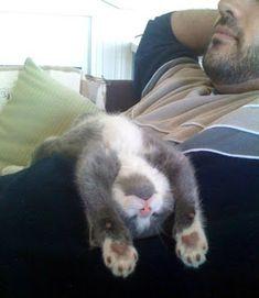 heeft niks met haken te maken maar wel met het poesje wat ik net heb gepint /Crochet Parfait: Laid-Back Cat Amigurumi