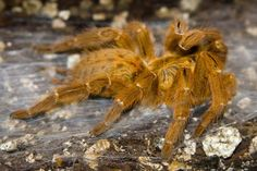 Dangerous Spiders in Africa: Sources For Africa's Scariest Spiders