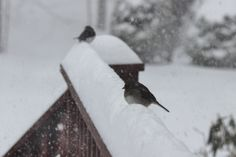 """""""#WinterinCT"""" """"  #Center of CT""""...........Winter in CT photo Contest.                                    Birds in the snow during the snow storm."""