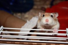 """And then what happened?"" #CutePetsCa #Hamsters #cute"