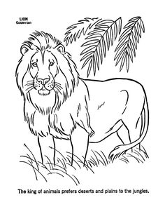 Wild Animal Coloring Pages wild animal coloring pages male lion coloring page and Wild Animal Coloring Pages. Here is Wild Animal Coloring Pages for you. Wild Animal Coloring Pages wild animal coloring pages male lion coloring page . Lion Coloring Pages, Cat Coloring Page, Printable Coloring Pages, Coloring Pages For Kids, Coloring Books, Printable Animals, Free Printable, Printable Crafts, Lion Craft