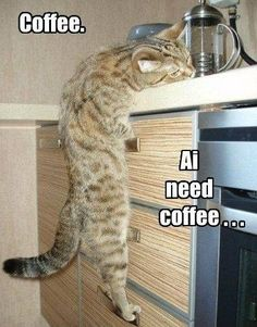 TOP 35 Funny Cats and Kittens Pictures | Funny Animals, Funny Cat | DomPict.com #catandkitten