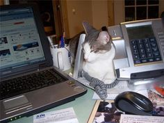 Earl the Cat is Office Manager at Little Woman Home for Animals in Huntsville, TX. cats-with-jobs