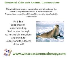 Essential Oil and Animal Connections:  Fir and Seal  #westcoastaromatherapy #essentialoils #fir #seal