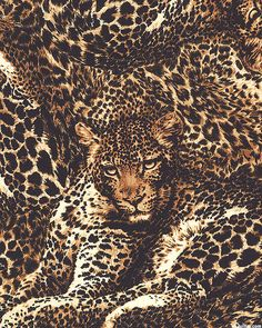 The Wild Side - Leopard Illusions - Quilt Fabrics from www.eQuilter.com