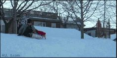 Dog catches robber with his sled gifs gif funny cool images cute funny gifs hilarious humor dog gifs dog images cool gifs video gifs Sneaky Animals, Big Animals, Funny Animals, Adorable Animals, Chacun Son Tour, Animal Pictures, Funny Pictures, The Last Laugh, Dog Humor