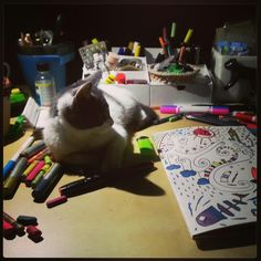 Drawing with the cat