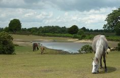 The New Forest, Hampshire, UK - love this of the ponies of the New Forest
