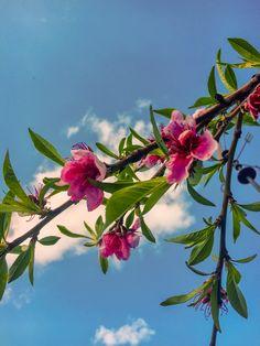 Avec les premiers signes du printemps, c'est le moment de chouchouter votre foie : soutenez-le régénérez-le ou drainez-le. Demandez conseil à votre naturopathe pour ne pas faire d'erreur. 📞📲