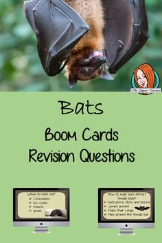 Bats Revision Questions This deck revises children's knowledge of Bats. There are multiple choice revision questions to check children's understanding. These question cards are self-grading and lots of fun! All About Me Crafts, Role Play Areas, A Classroom, Multiple Choice, Primary School, Bats, Teacher Resources, Climate Change, Lesson Plans