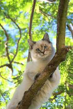 """in-apricity:  Peek-a-Boo by Sara Conlan My cat named Boo♡     """"I love cats because I enjoy my home; and little by little, they become its visible soul."""" Jean Cocteau"""