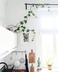 Przytargałam ze śmietnika tego zielonego bluszczyka  chyba będzie mu tu dobrze ?  #home #dom #kuchnia #bluszcz #plants #garden #homegarden #scandistyle #design #window #światło #light #white #whitekitchen #kitchen #scandi #vsco #vscocam #lonoryt #linocut #art #artsy #blackandwhite by margo.hupert.art