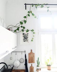 Przytargałam ze śmietnika tego zielonego bluszczyka  chyba będzie mu tu dobrze ?  #home #dom #kuchnia #bluszcz #plants #garden #homegarden #scandistyle #design #window #światło #light #white #whitekitchen #kitchen #scandi #vsco #vscocam #lonoryt #linocut #art #artsy #blackandwhite by margo.hupert.art