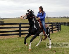 UK Senior Chelsea Reumont is working hard to get the UK Rodeo team up and running!