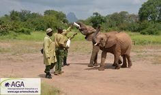 Innerhalb weniger Minuten leeren die kleinen Elefanten ihre Milchflaschen. Nairobi, Elephant, Animals, 3 Year Olds, Elephants, National Forest, Animales, Animaux, Animal