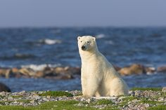 Experience Canada Mothers & Cubs Adventure...