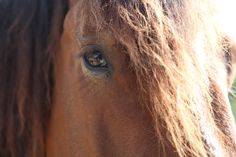 Les animaux du bonheur Asbl. Evrange. Bonté et placidité dans ce regard! A new association nearby thrilling to confort us (handicapped or not) thanks to the ever great help of their so placid horses, poney and even tiny rabbits