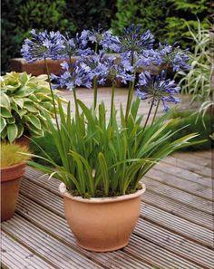 Jardiner : la méditerranée sur votre terrasse ! - Bien-être au naturel