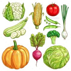 Buy Farm Vegetables Vector Sketch Isolated Icons Set by VectorTradition on GraphicRiver. Vegetables sketch icons set of farmer market veggies. Vector isolated cauliflower and corn, zucchini squash and green. Logo Dulce, Sketch Icon, Plan Sketch, Vegetable Drawing, Onion Leeks, Vegetable Illustration, Food Clipart, Watercolor Fruit, Food Drawing