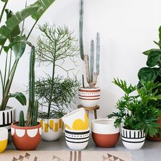 Pop and Scott tribal plant pots Cacti And Succulents, Potted Plants, Garden Plants, Indoor Plants, House Plants, Pots For Plants, Pop And Scott, Painted Plant Pots, Decoration Plante