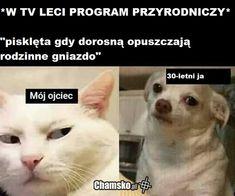 Haha Funny, Hilarious, Polish Memes, Weekend Humor, Aesthetic Memes, Funny Mems, Creepypasta, Bts Memes, My Father