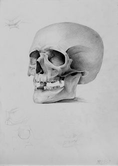 Academic Drawing by Migle Kazlauskaite, via Behance