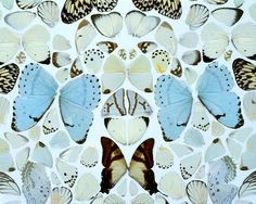 "Damien Hirst ""Sympathy in White Major-Absolution II"" made from dead butterfly wings"