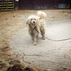 El perro encadenado: una conducta castigada por ley