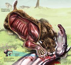 Como era a anatomia de um tigre dentes-de-sabre?