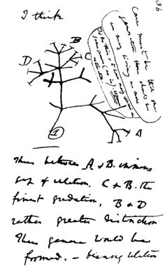 Charles Darwin's 1837 sketch, his first diagram of an evolutionary tree from his First Notebook on Transmutation of Species (1837)