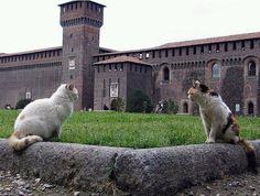 Castello Sforzesco, Milan, Italy. 45°27′50.98″N 9°11′25.21″E