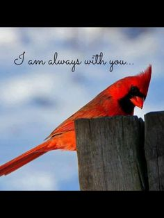 Who Are My Spirit Guides? How To Identify Your Spirit Guides — Amanda Linette Meder Spirit Guides, In Loving Memory, Beautiful Birds, Beautiful Things, My Father, Grief, Me Quotes, Bird Quotes, Qoutes