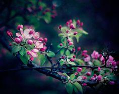 Night Sakura   Flickr - Photo Sharing!