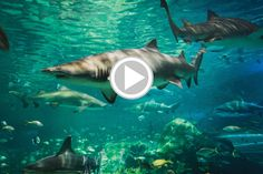 5 Endangered Shark Species