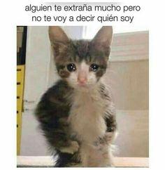 Cute Memes, Stupid Funny Memes, Dankest Memes, Weird Text, Funny Spanish Memes, Pinterest Memes, Kittens, Cats, Disney Drawings