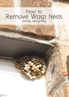 How to Remove Wasp Nests without paying someone or getting stung