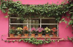 O vitrô da cozinha não é mais o mesmo desde que a paisagista Olga Wehba incluiu a trepadeira jasmim-de-madagáscar ao longo da fachada. A espécie foi conduzida por fios de náilon. Sobre o parapeito, os vasinhos de barro trazem calanchoês em tons de rosa, a