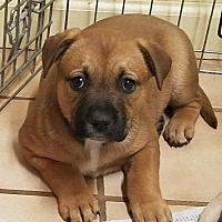 Available Pets At Out Of The Woods Animal Rescue Of Arkansas In