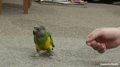 Polly want an Oscar ... Achie