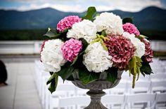 Ortensie bianco a contrasto con toni di rosa. Ideale per vasi importanti