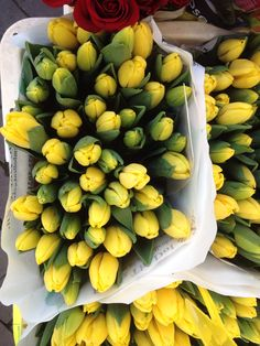 Tulipani da Amsterdam