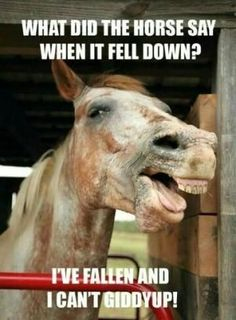 What did the horse say when it fell down? I've fallen and I can't giddyup!